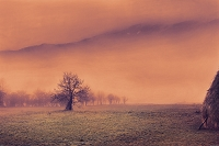 The mysterious scene in southwestern Serbia with apple tree and mountains in the distance rising from the the fog