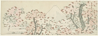 所蔵:アムステルダム国立美術館 The Mount Fuji with Cherry Trees in Bloom. Artist:  Hokusai, Katsushika (1760-1849) Location:  Rijksmuseum, Amsterdam.