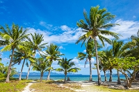 Palm trees and blue sky on Malcapuya Island, Culion, Palawan, Philippines