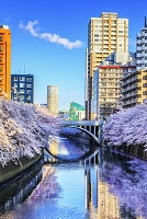 Japan, Kanto, Tokyo, Cherry Blossom (sakura) along the Meguro river, Photo by Maurizio Rellini/SIME