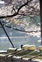 Ueno Park, Photo by Maurizio Rellini/SIME