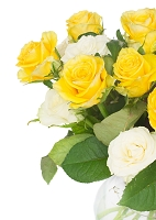 bouquet of fresh roses. bouquet of yellow and white fresh roses close up isolated on white background