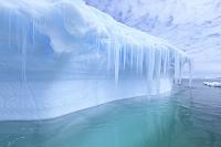 南極 プレノー湾