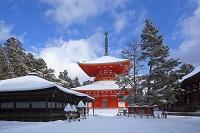 和歌山県 御影堂と三鈷の松と根本大塔