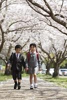 ランドセルを背負って桜並木を歩く男の子と女の子