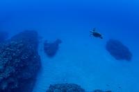 西表島 沖縄のサンゴ礁のイメージ タイマイ