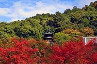 京都府  永観堂