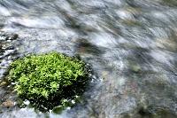 渓流と苔むした石