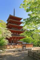 奈良県 長谷寺 五重塔(昭和の名塔)と新緑