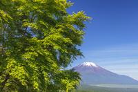 山梨県 新緑と富士山