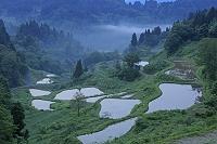夜明の蒲生の棚田 新潟県
