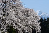 桜と甲斐駒ヶ岳 山梨県