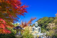 神奈川県 鎌倉大仏と紅葉