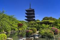 京都府 東寺の五重塔