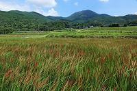 福岡県糸島市 二丈の赤米