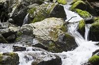安倍川 上流 石の大きさ
