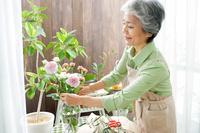 花瓶に花を生けるシニア日本人女性