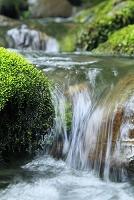 渓流の流れと苔むす岩