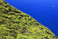 長崎県 新緑の大瀬崎自然林 福江島