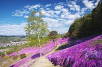 北海道 芝ざくら滝上公園