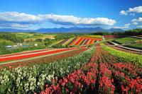 北海道 美瑛町 展望花畑四季彩の丘