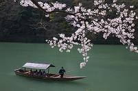 京都府 桜と屋形舟 嵐山