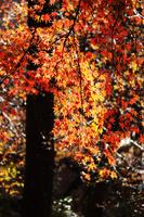 滋賀県 小雨降る紅葉