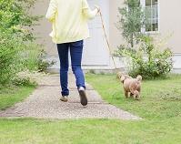 散歩をする女性とトイプードル 犬