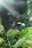 倒木に芽吹いた若葉と光