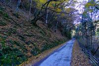 静岡県 天城路(日本の道百選)