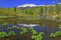 長野県 一の瀬園地 ミズバショウ咲くどじょう池と残雪の乗鞍岳
