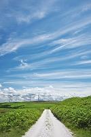 北海道 宗谷丘陵の風力発電と白い道(ホタテの貝殻を敷き詰めた...