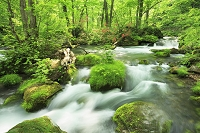 青森県 奥入瀬渓流とツツジ