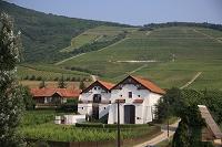 ハンガリー トカイ・ワイン地域 ワインセラーとブドウ畑
