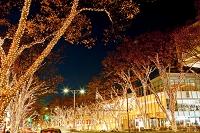 東京都 クリスマスイルミネーションの表参道