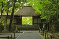 京都府 新緑の法然院