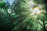 森と太陽 森林浴