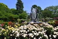 千葉県 市川市 里見公園のバラ