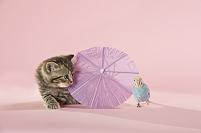 可愛い猫とセキセイインコ
