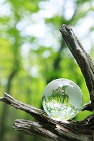 倒木に置かれた地球儀と新緑の森