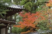 京都府 高桐院の龍翔寺