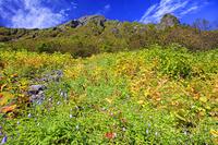 山梨県 二俣付近より花畑と北岳 南アルプス