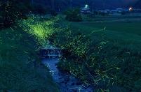 兵庫県 ホタル