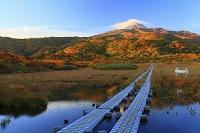 秋田県 鳥海山・竜ヶ原湿原 朝方