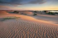 メキシコ 砂漠