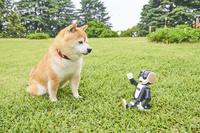 柴犬と家のロボット