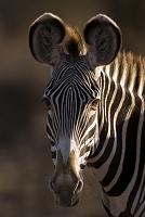 サンブール国立保護区