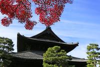 京都府  京都市 秋の建仁寺 法堂