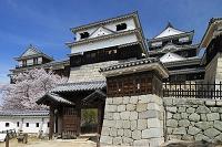愛媛県 サクラ咲く松山城天守閣