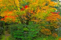 京都 大徳寺 高桐院の紅葉